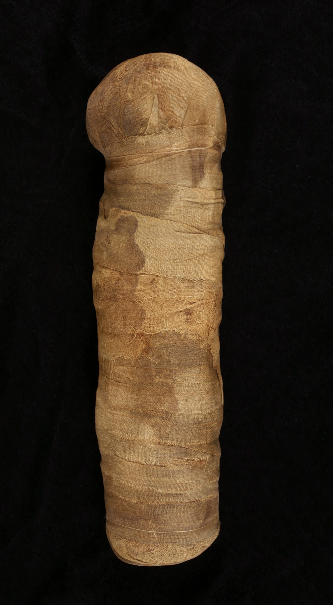 This is an actual cat mummy that is on display at Walters Art Museum.