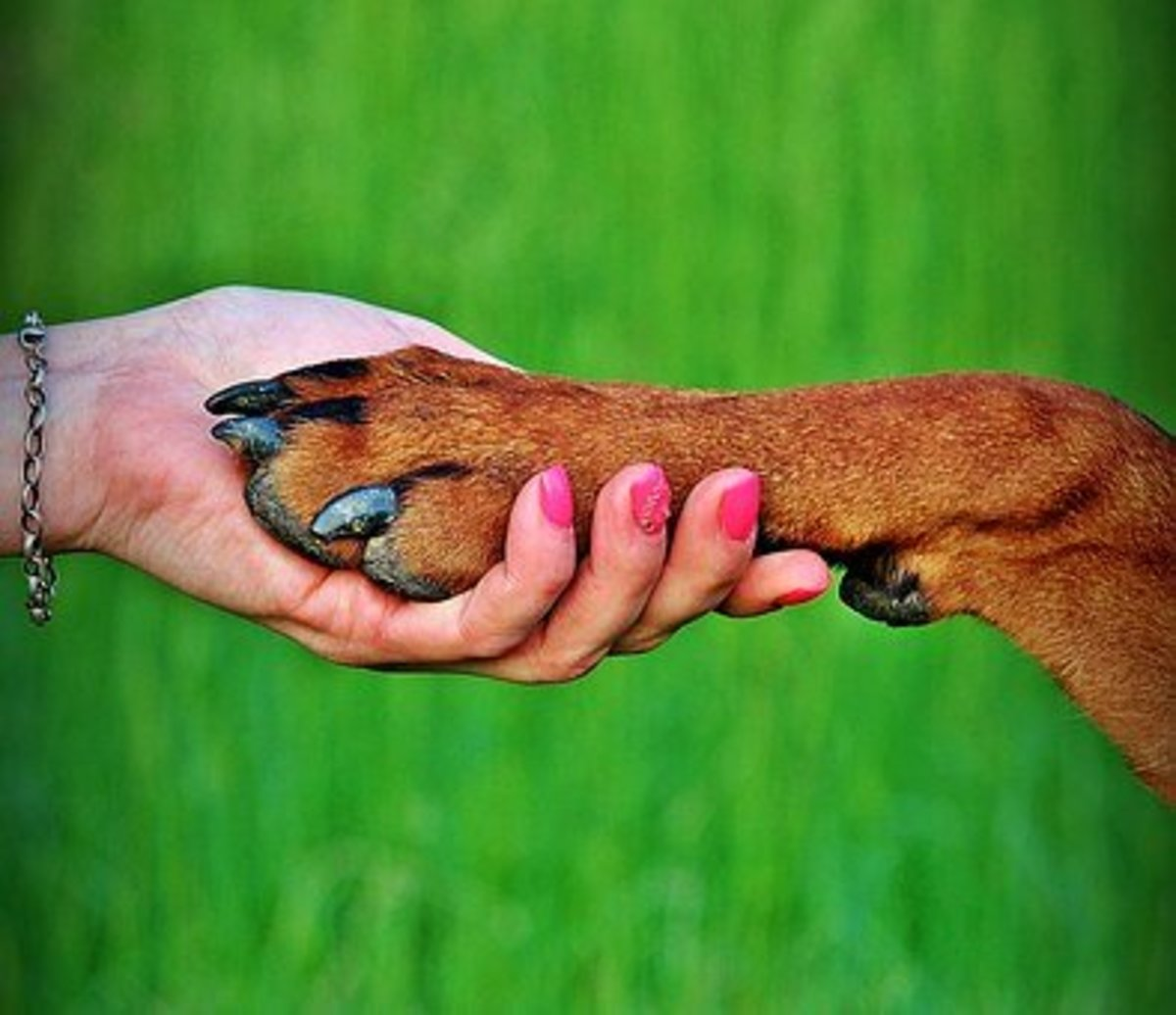 The love and friendship between a person and their dog is unshakeable
