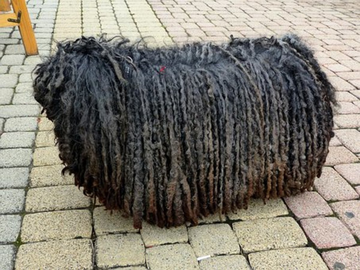 Nots that's what I call a shaggy dog story.