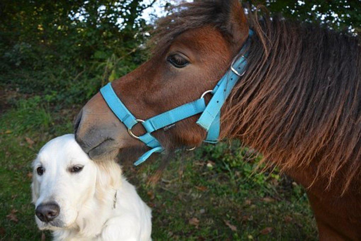 A dog and pony show - idiom