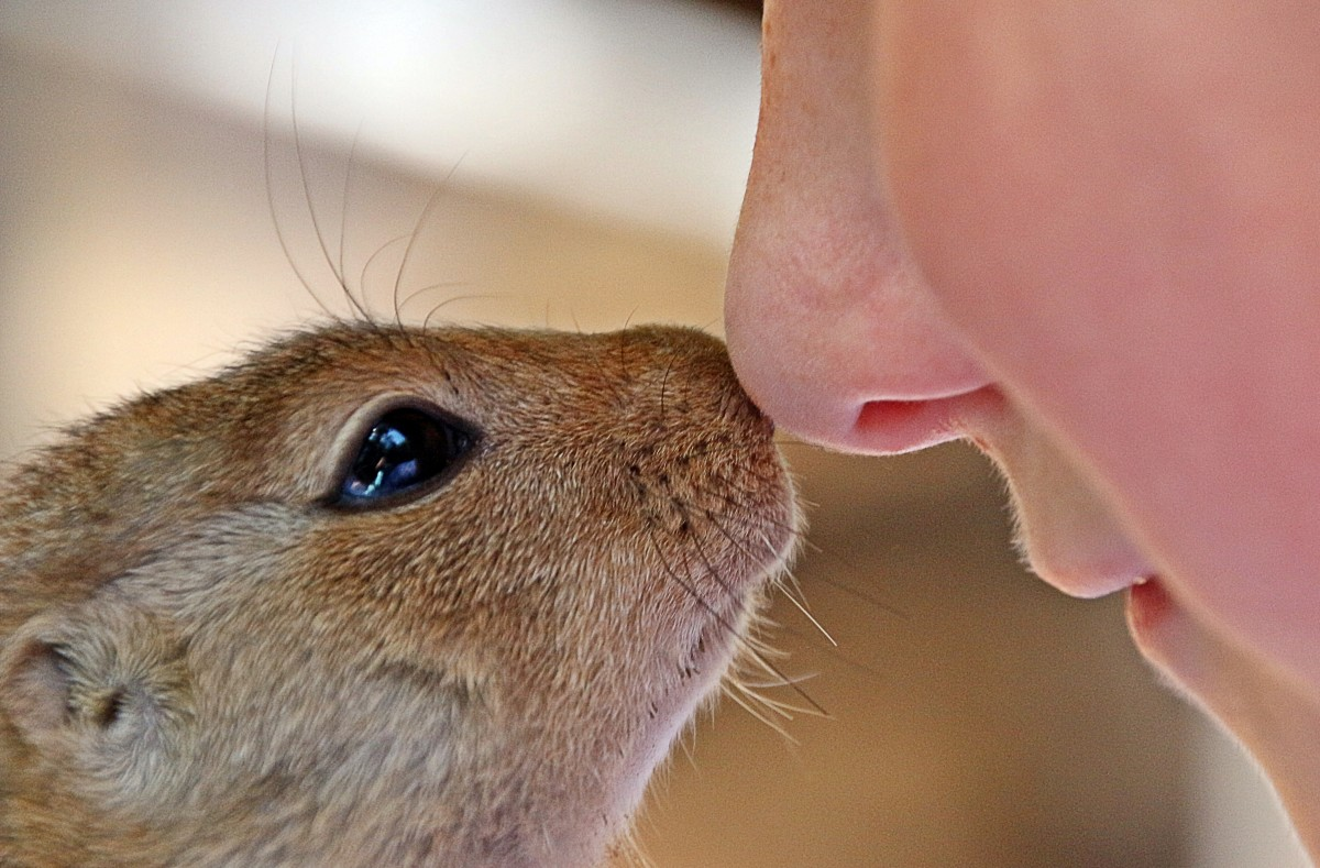 The nose of humans and other mammals contains snot.