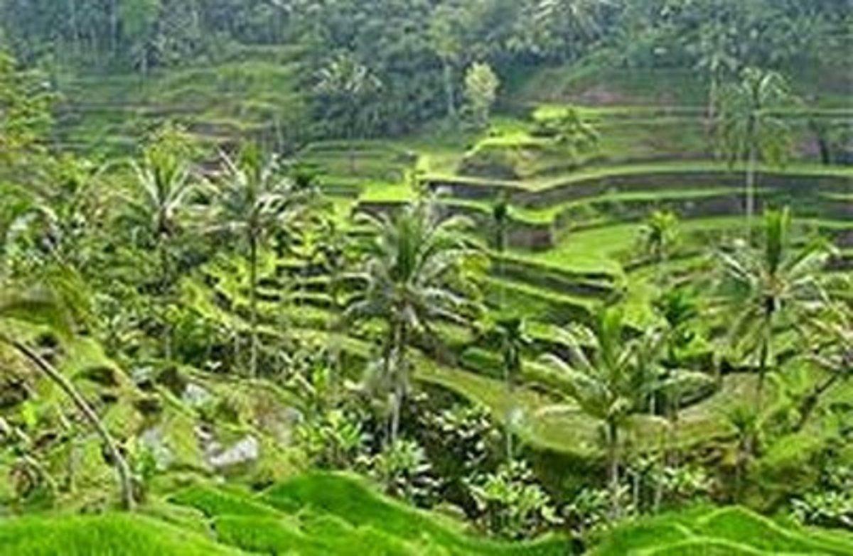 Intensive Subsistence Farming