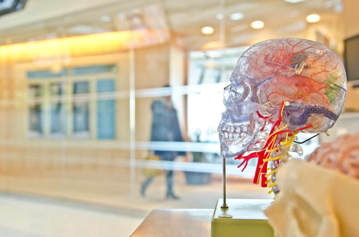 The brain is, unsurprisingly, one of the most important personality determinants.
