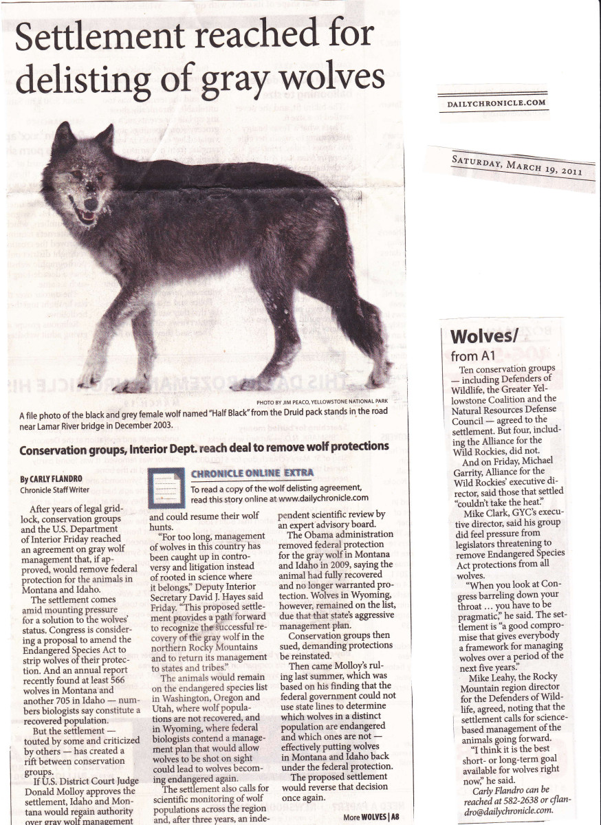 """Settlement reached for delisting of gray wolves"" Saturday, March 19, 2011"