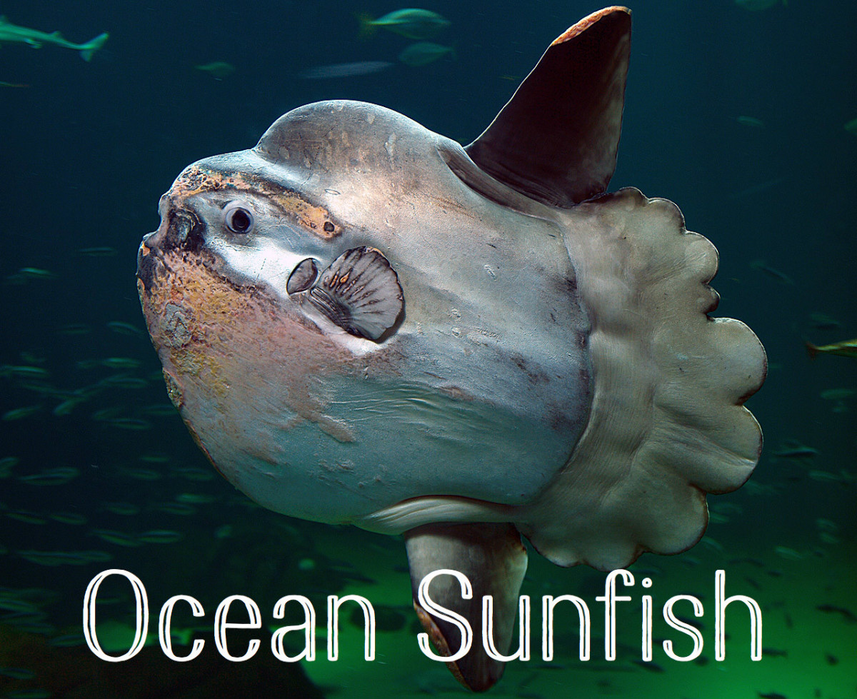 list of ocean animals: a through z | owlcation