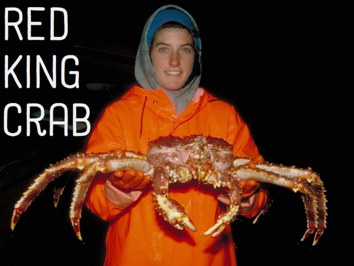 Red King Crab. Licensed under Public Domain via Commons