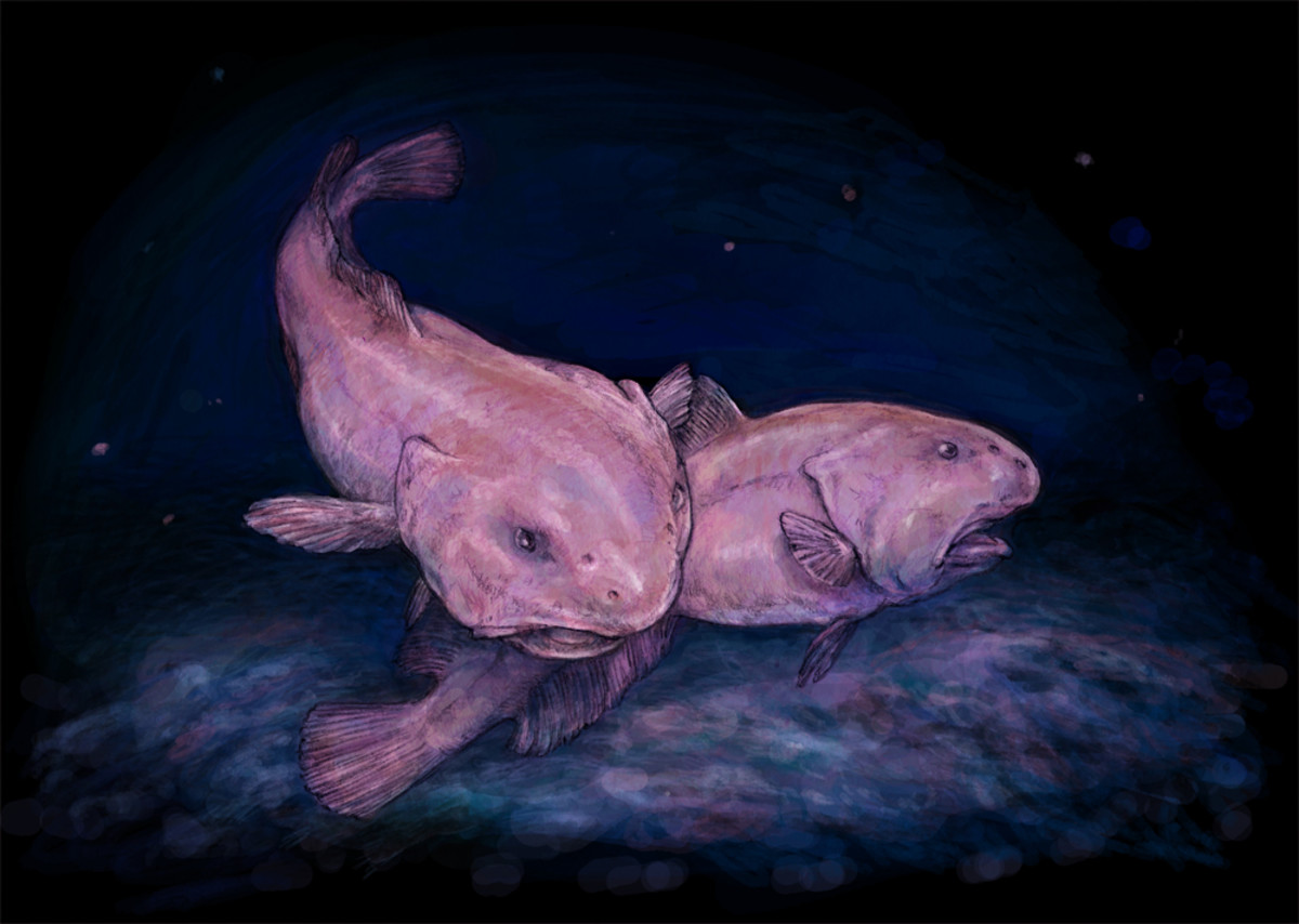 Artist's impression of two blobfish in their deep-sea habitat