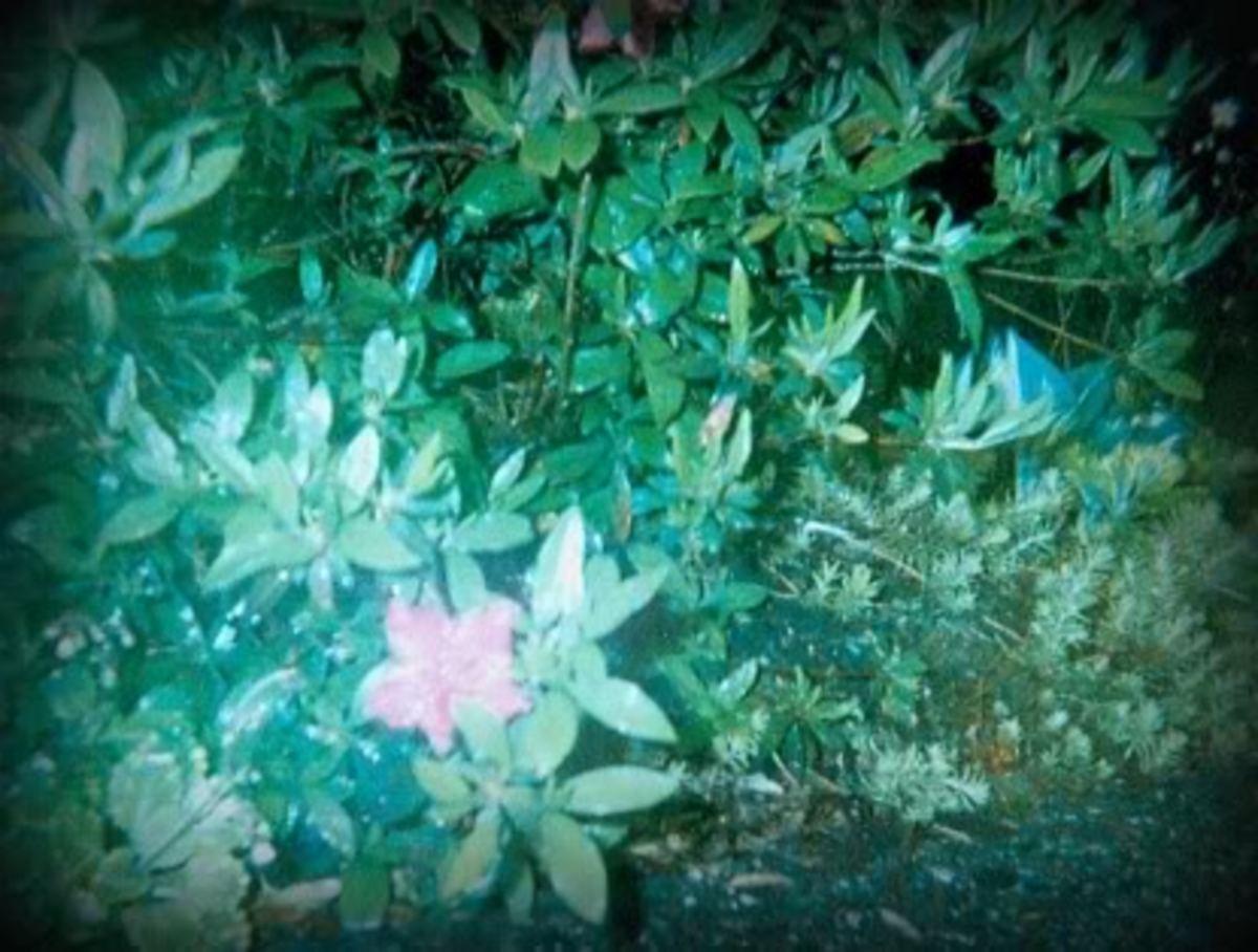 ralph-waldo-emerson-poems