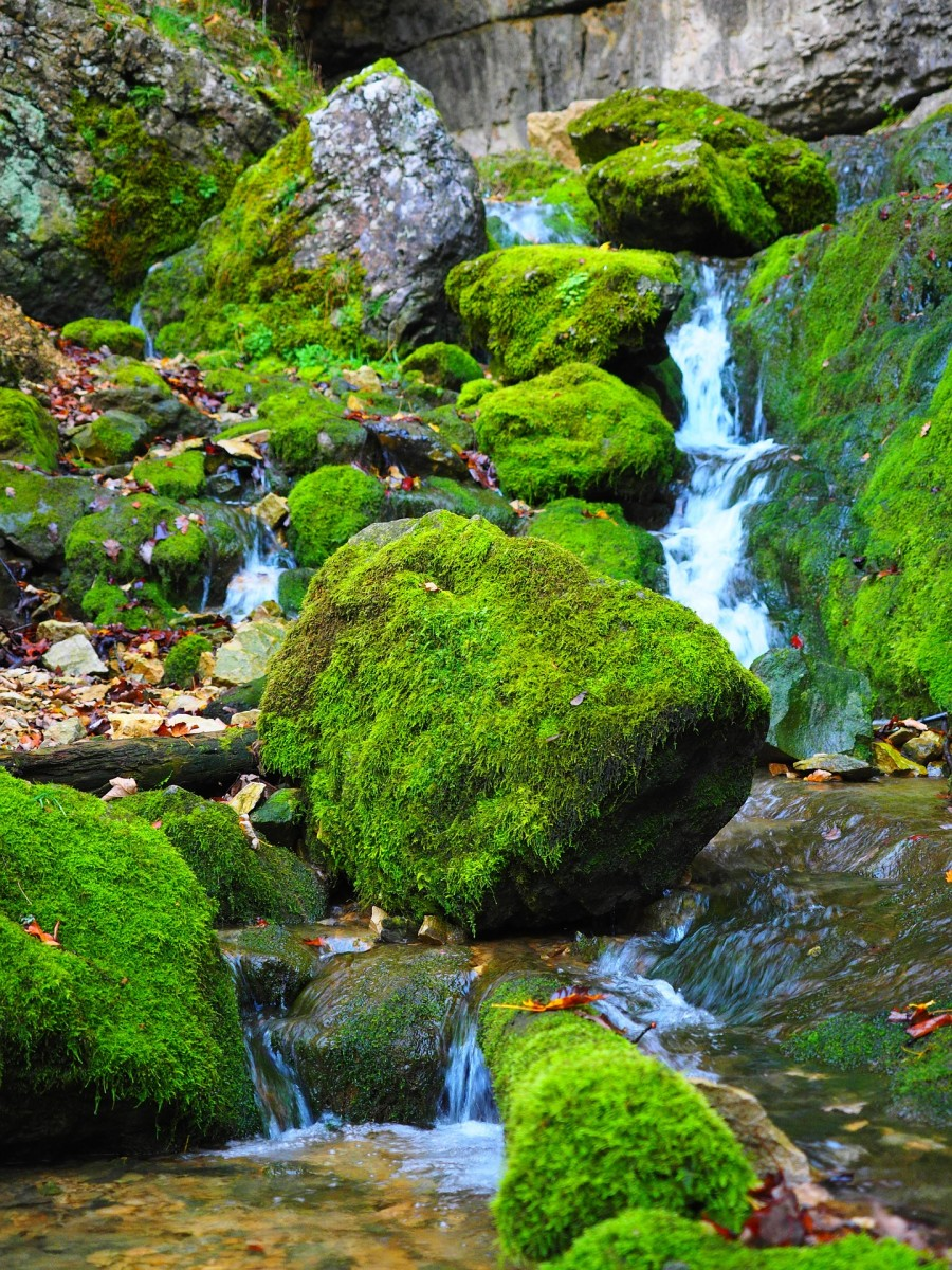 Beautiful moss growing by a stream