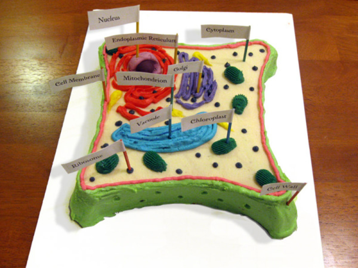 Fabulous How To Create 3D Plant Cell And Animal Cell Models For Science Class Wiring Cloud Tobiqorsaluggs Outletorg