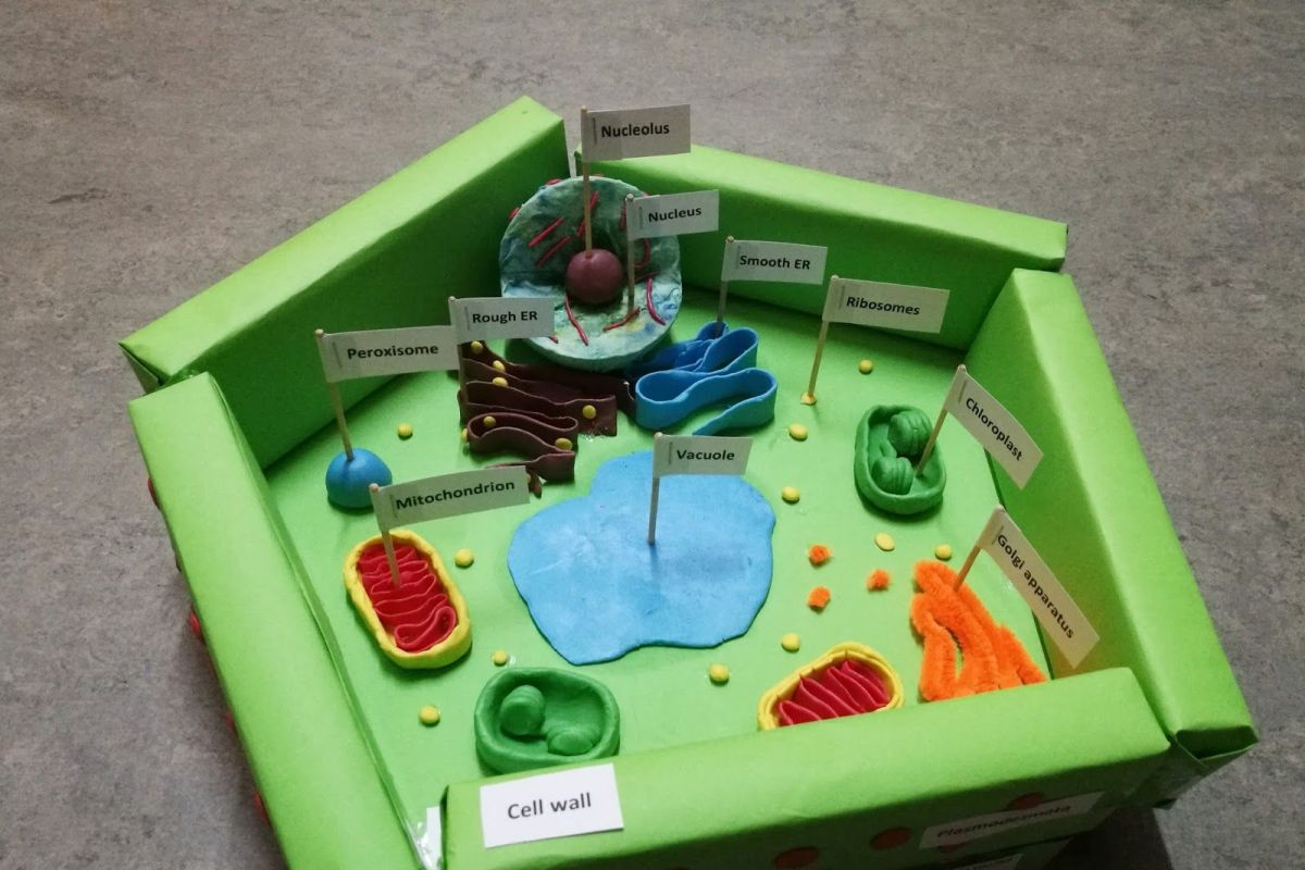 Get creative and build a beautiful plant cell model!