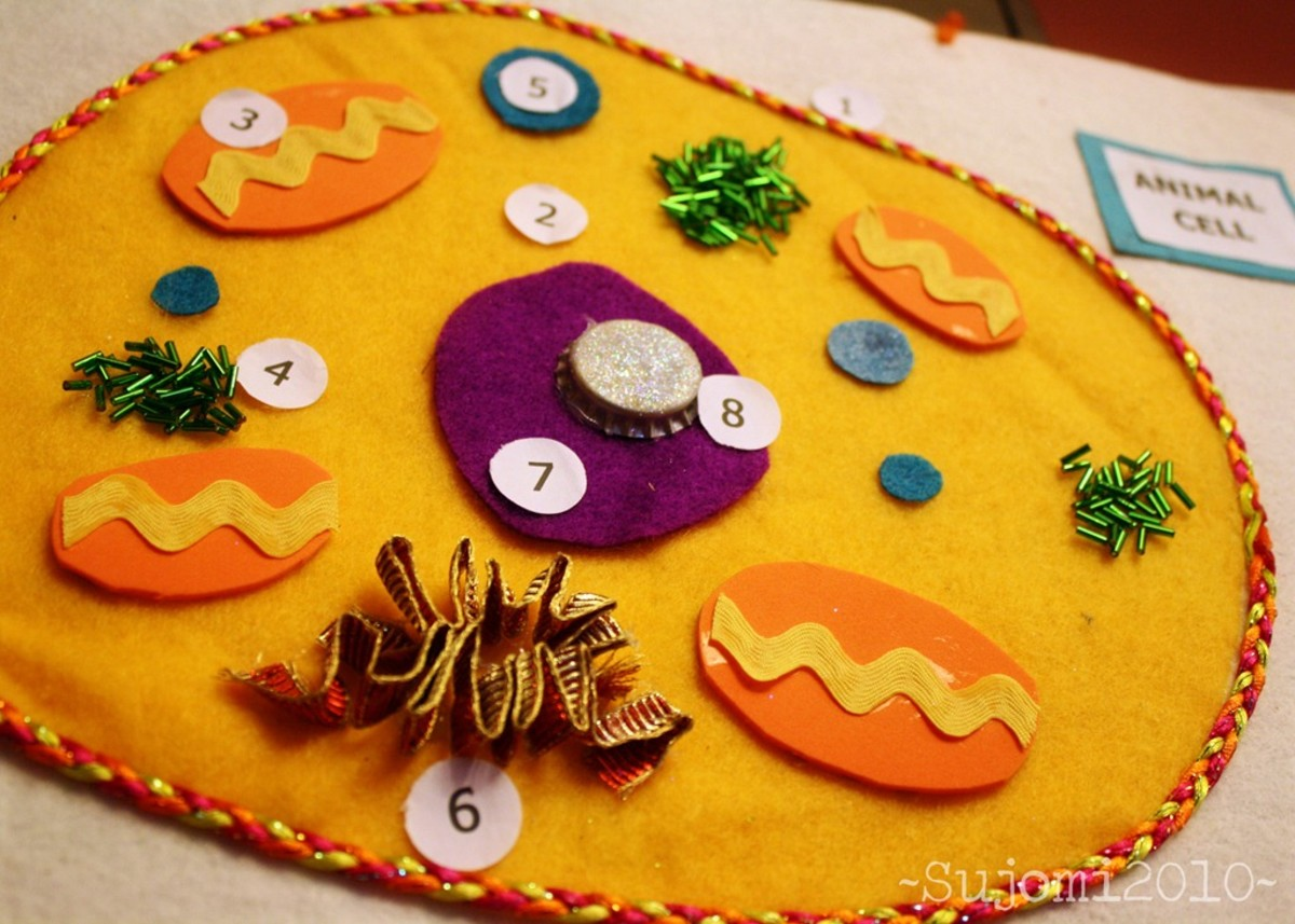 How to Create 3D Plant Cell & Animal Cell Models for ...