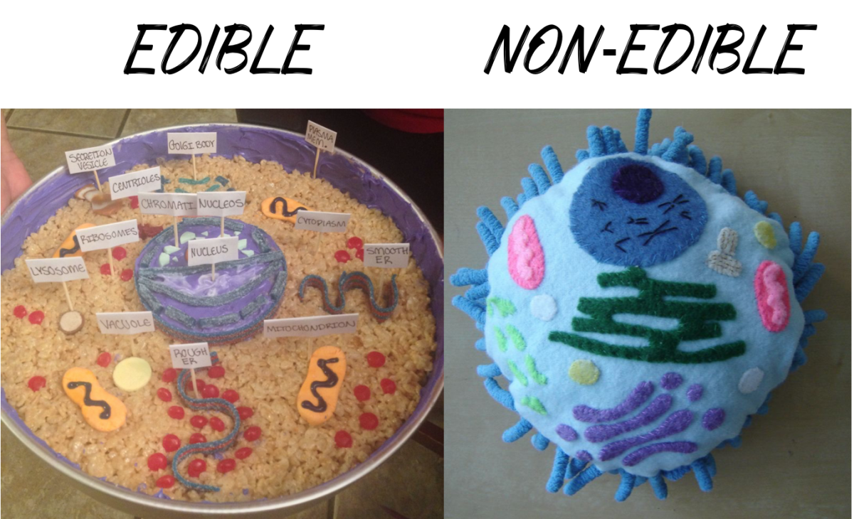 Decide whether your cell model will be edible or not.