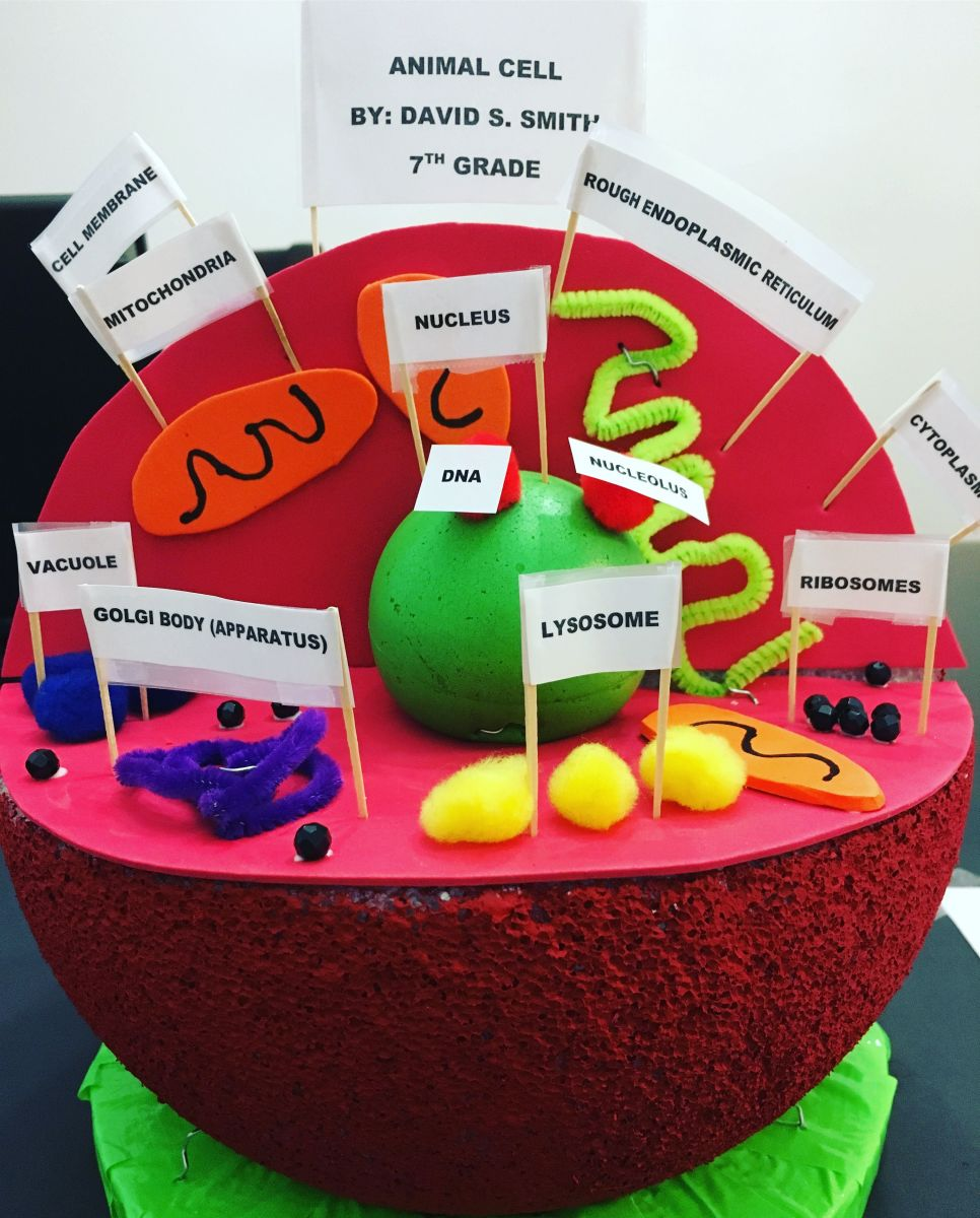 Fabulous How To Make A 3D Plant Cell Diagram Plant Cell Model Wiring Wiring 101 Mecadwellnesstrialsorg