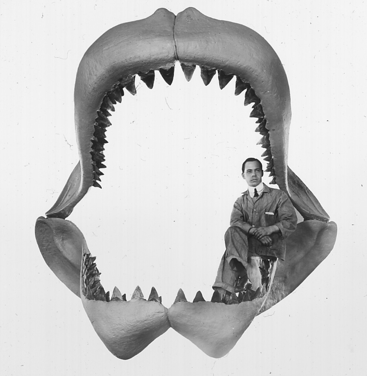 A fossil jaw of the Megalodon with a man sitting inside.