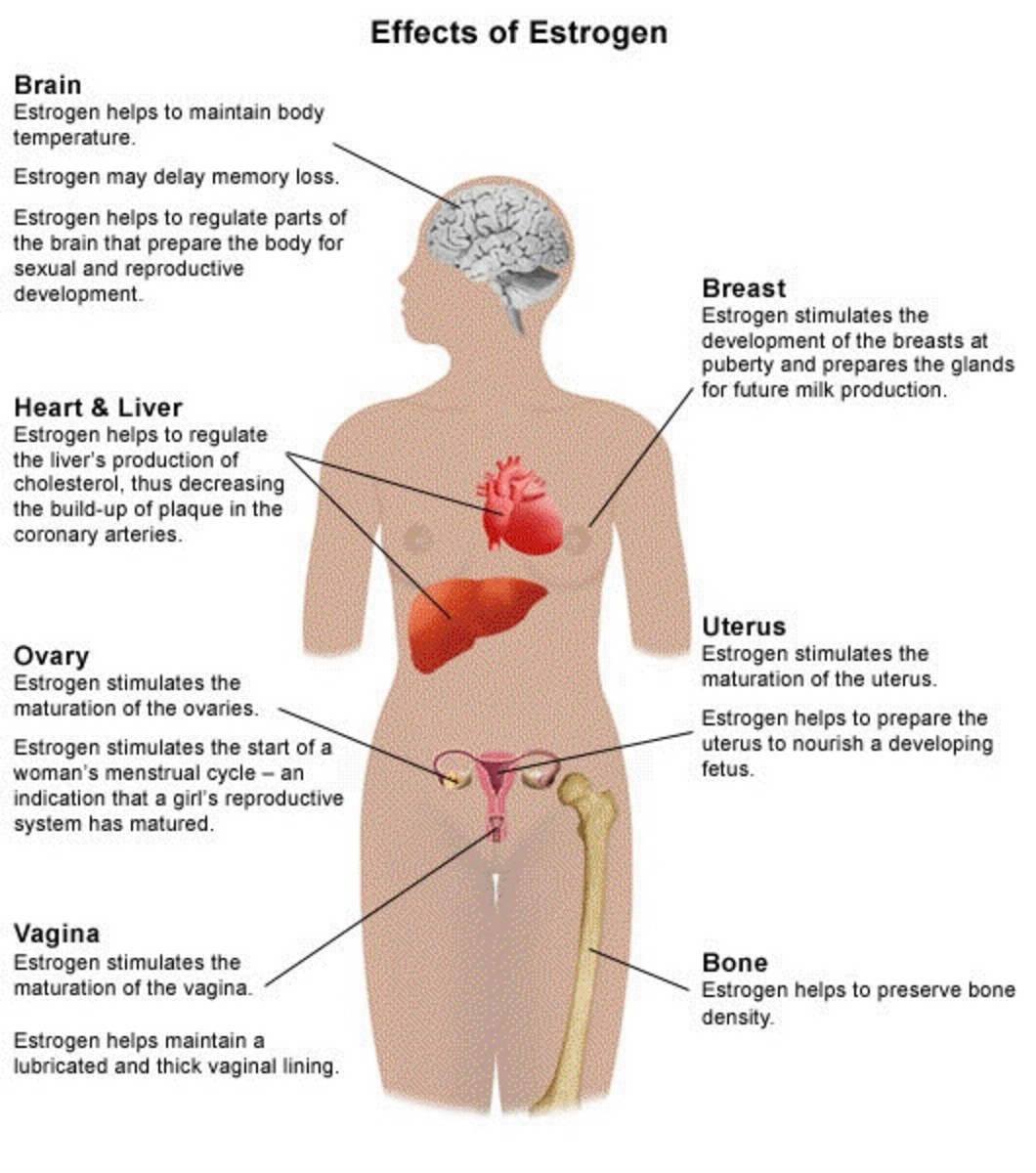 The Effects of Estrogen on the Female Body