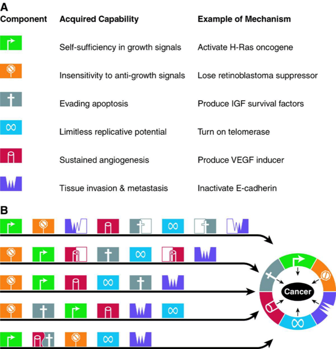 It is suggested that all the types of cancer have acquired the same set of functional capabilities during their development, albeit through different pathways