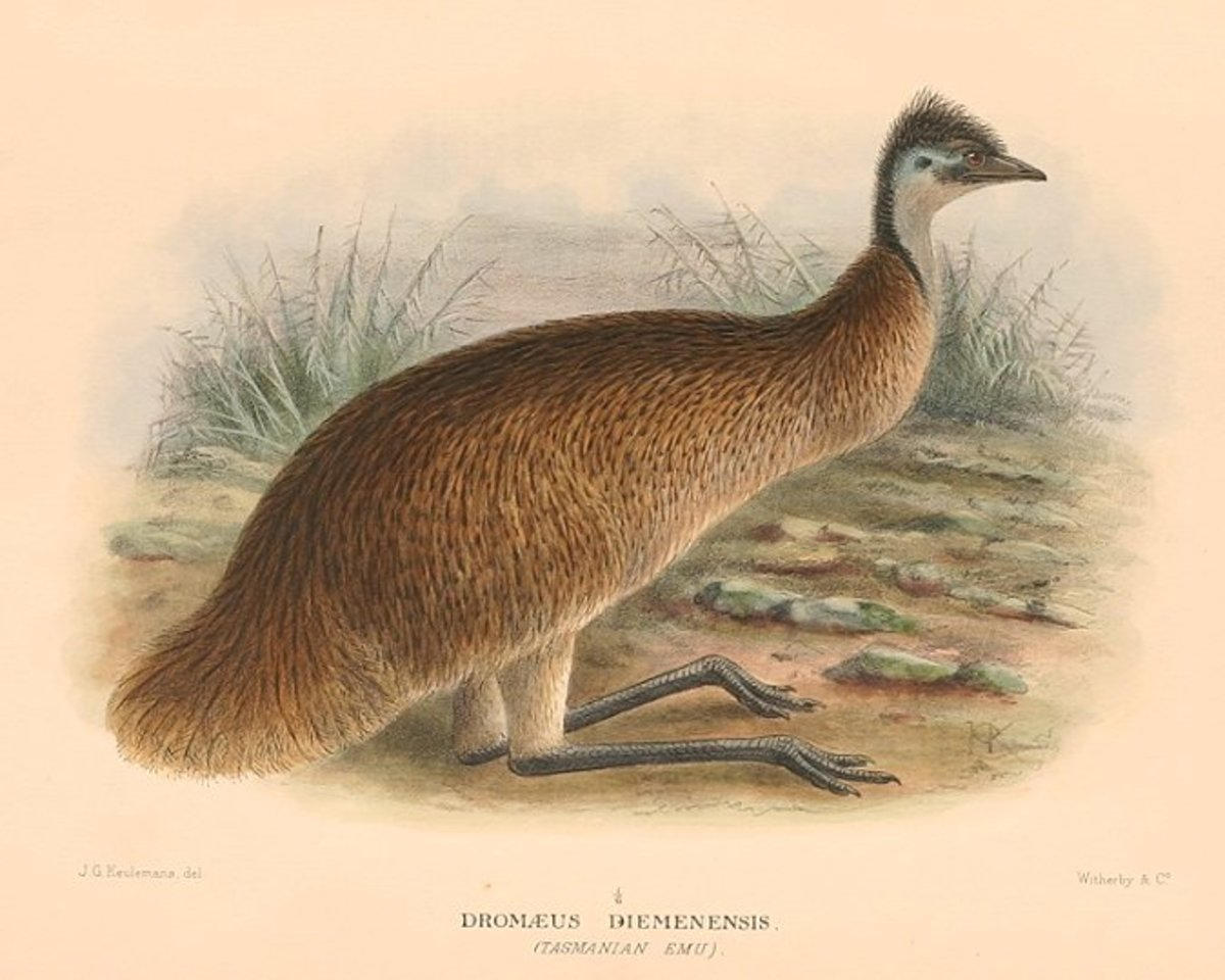 wiped-out-from-existence-15-extinct-bird-species