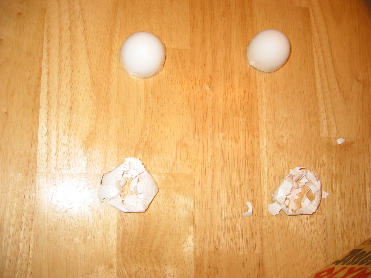 8. Record results. Two eggs crushed but the other two hold!