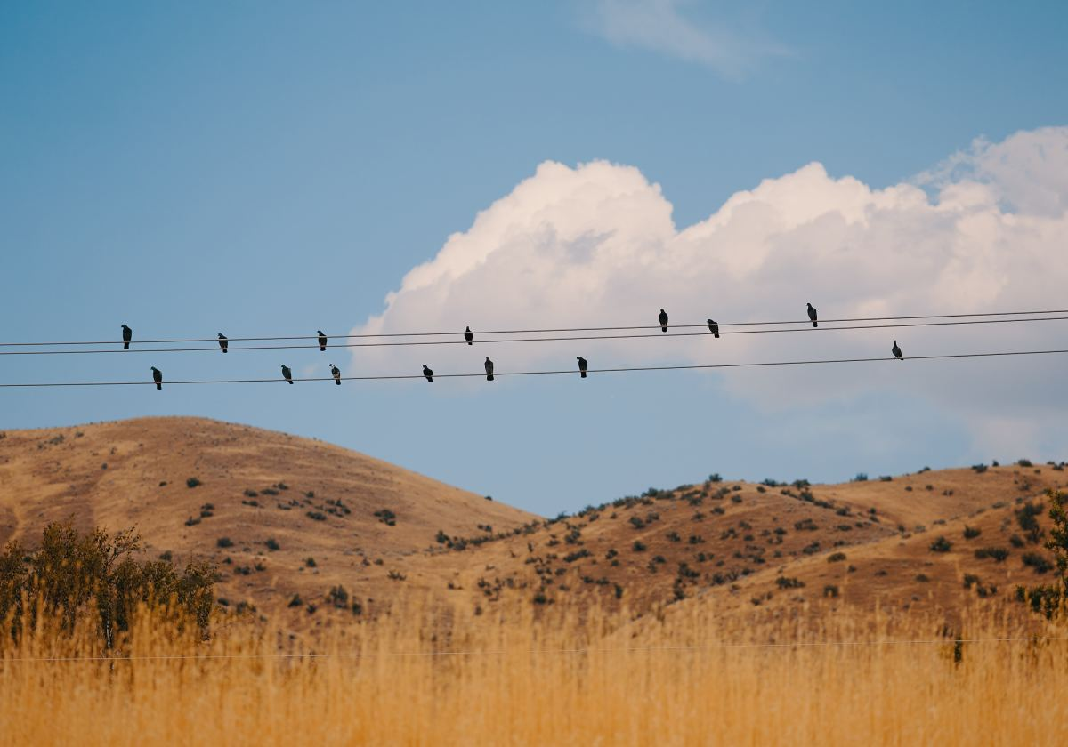 Birds safely sitting on a wire.