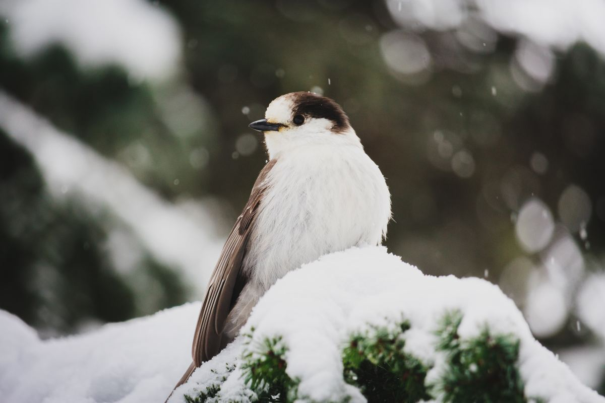 The only bird's that fly south for the winter are those whose food supply disappears in the winter months.