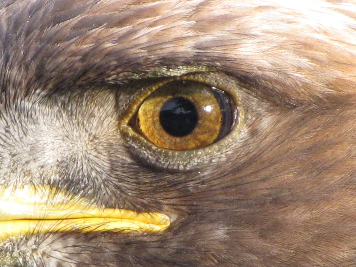Touted as the ultimate in senses - the Eagle Eye. But senses are not just limited to sight - there are many weird and wonderful senses in the living world