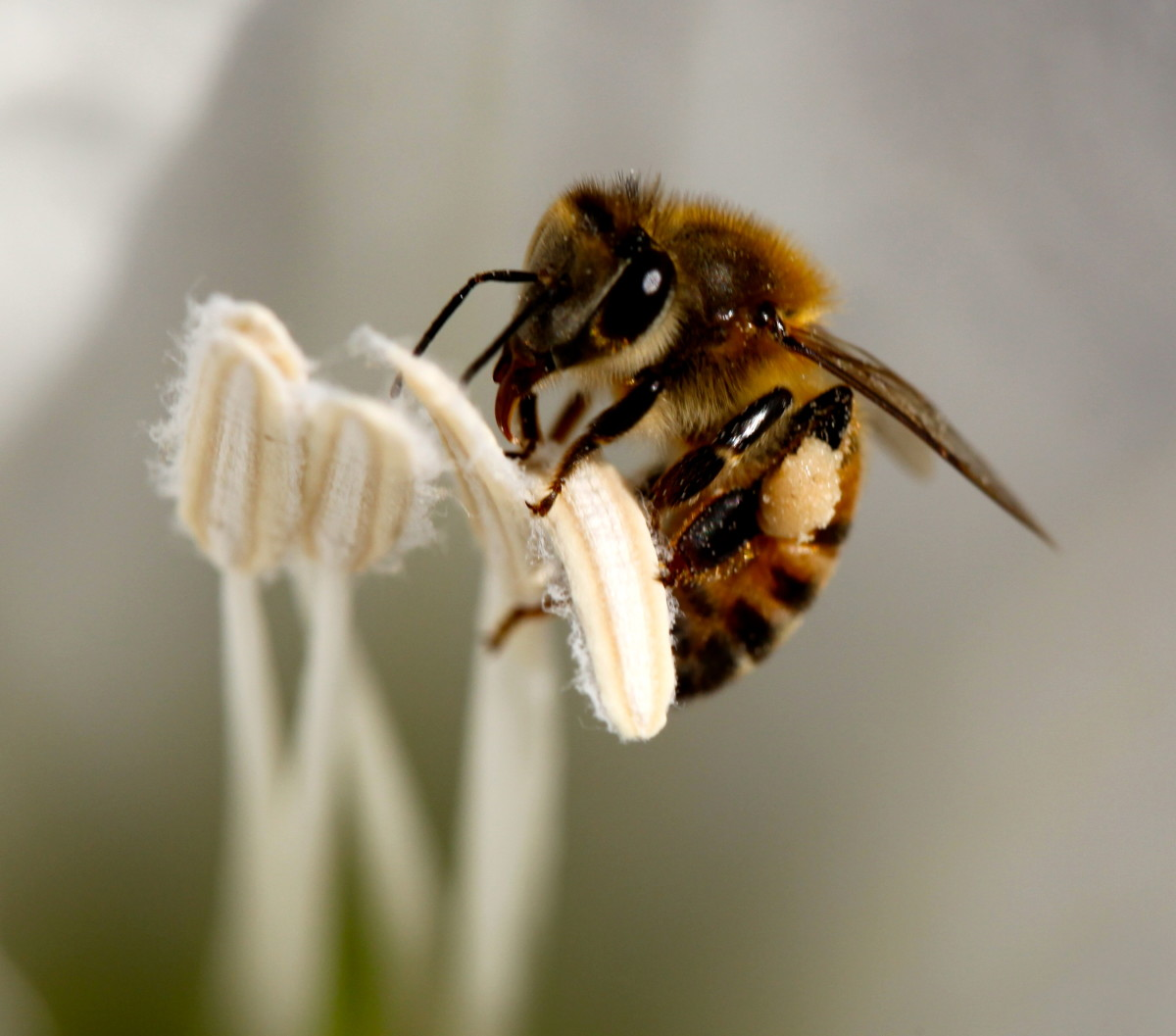 Some bees prefer one type of crop over another. It's important to protect all species of bees.