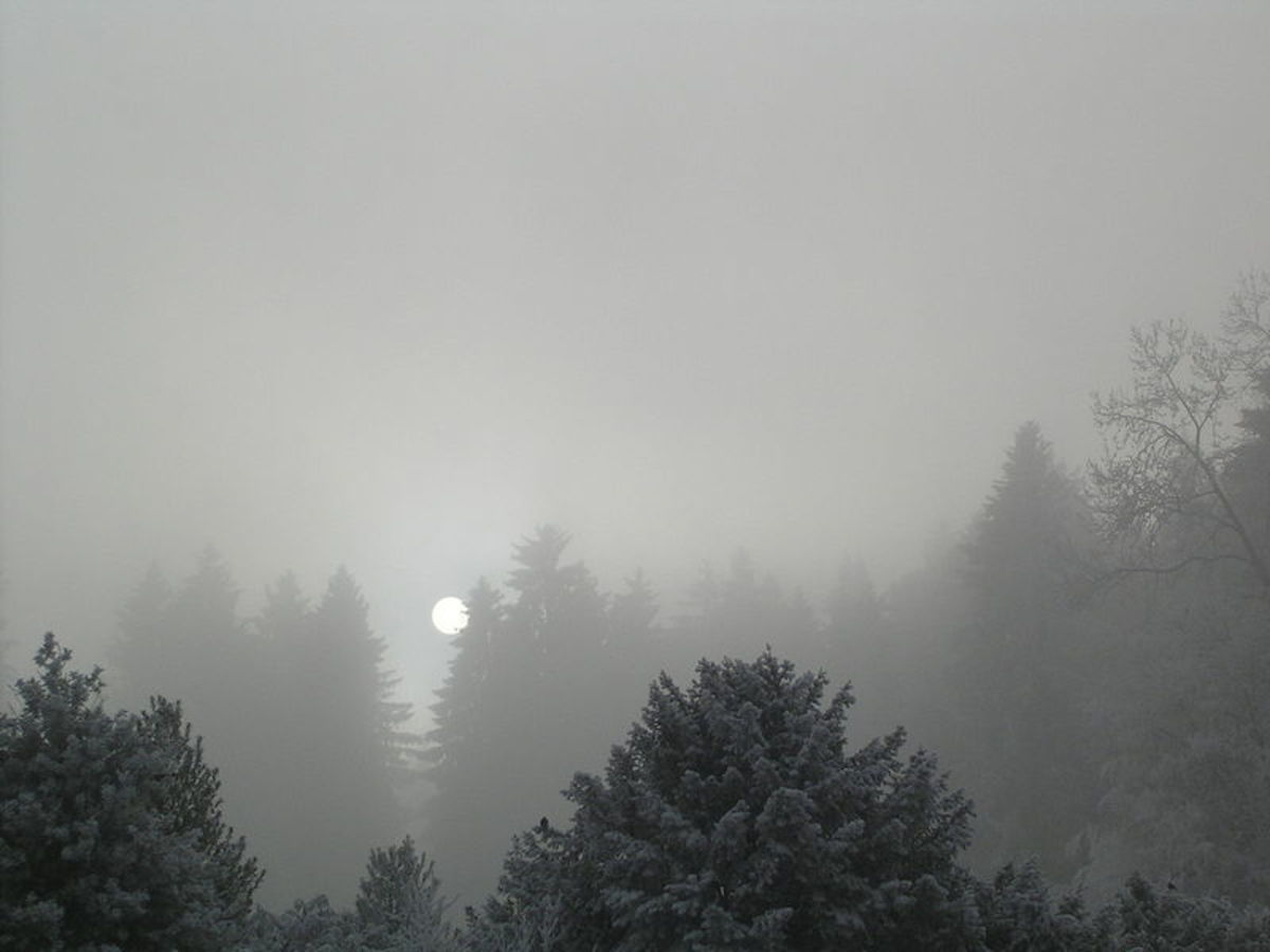 Thick sheets of stratus clouds over a pine forest
