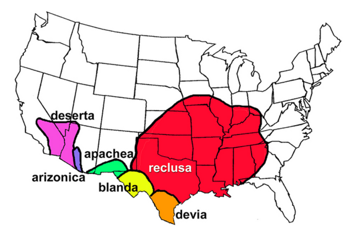 Map Showing the Range of Different Types of Recluse Spider Species in the US: Reclusa, Deserta, Apachea, Etc.