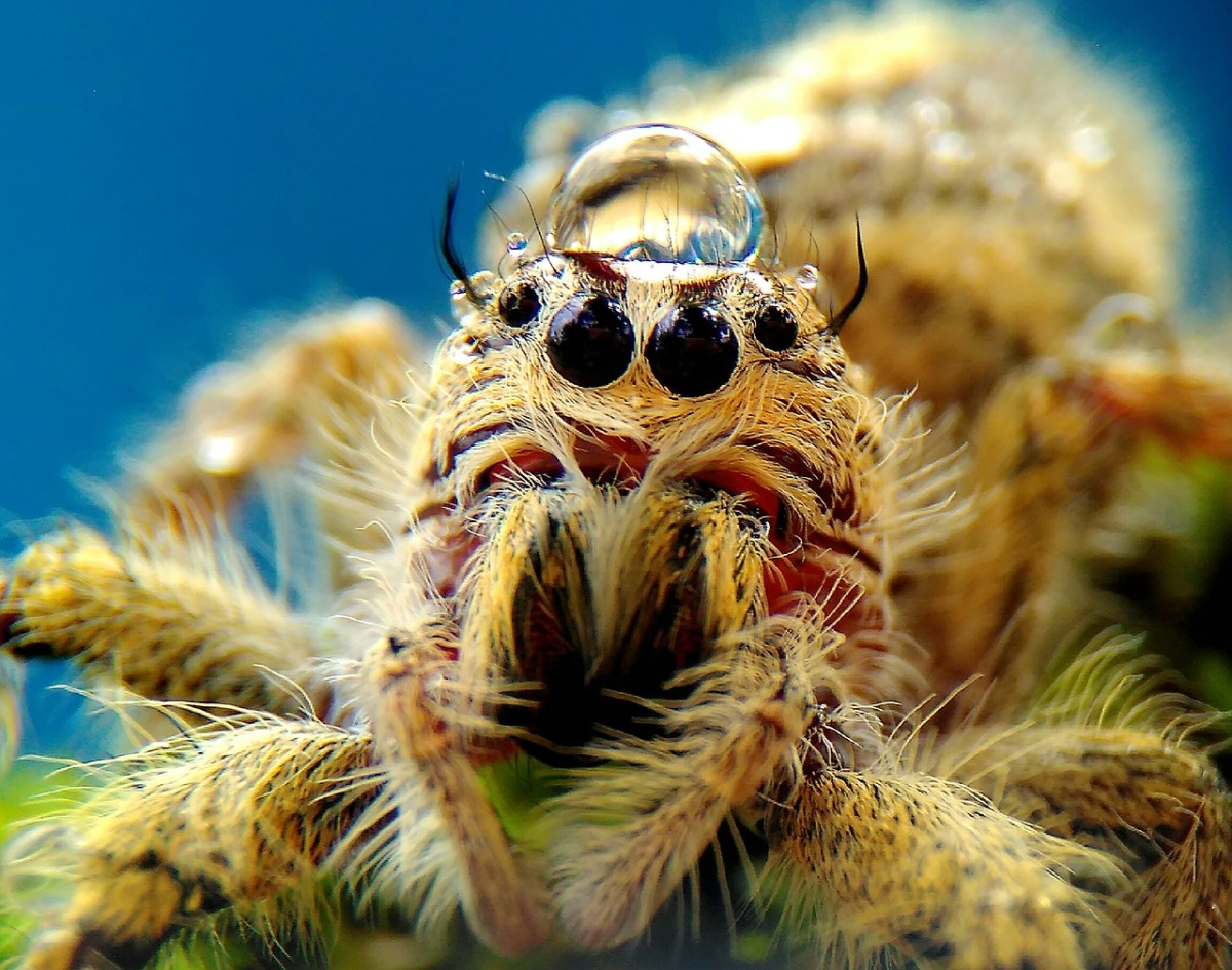 Jumping Spiders Are Photogenic!