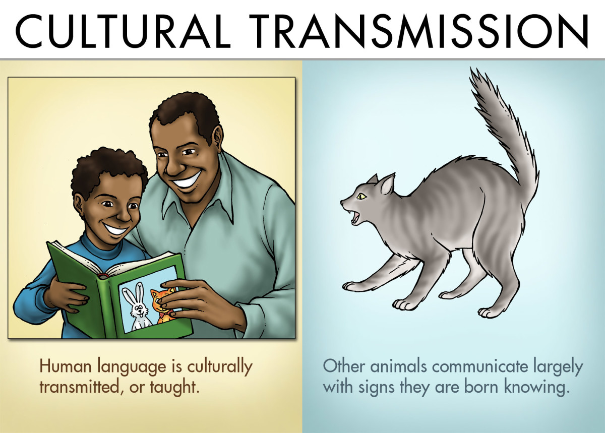 Cultural Transmission: Human language is culturally transmitted, or taught. Other animals communicate largely with signs they are born knowing.