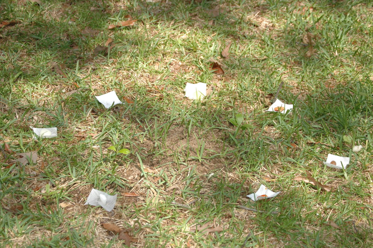 Several food items placed equidistant from the center of an ant hill.