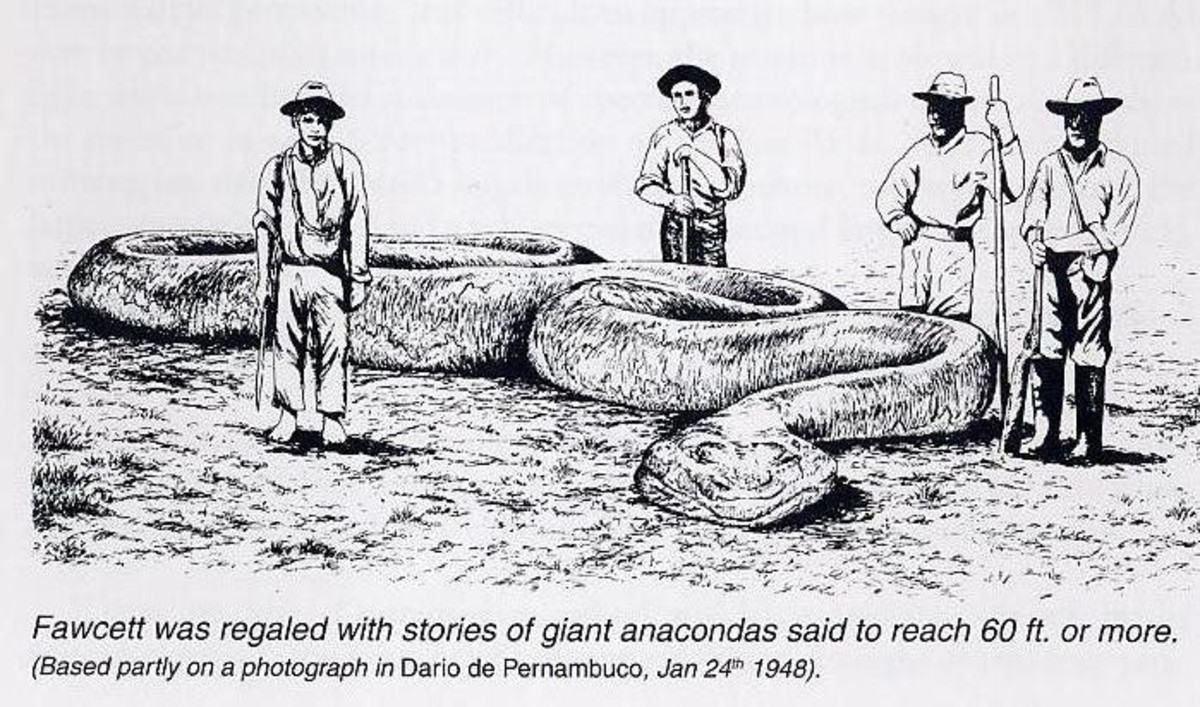 Fanciful drawing of the monstrous snake Fawcett reported seeing