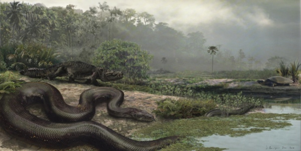 Titanoboa in the foreground
