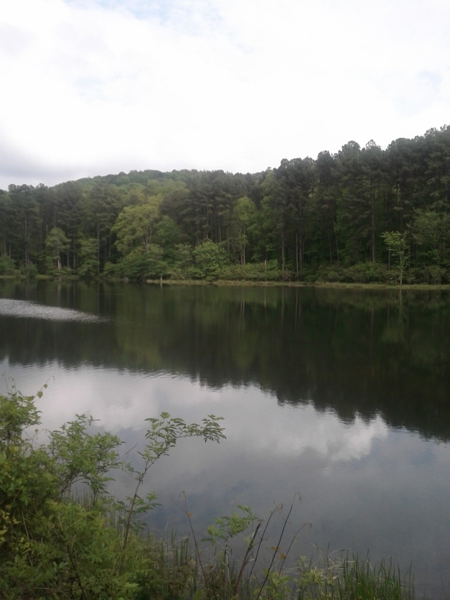 Beautiful lakes, trails rivers and trees are plentiful in the southeastern national forests and parks.
