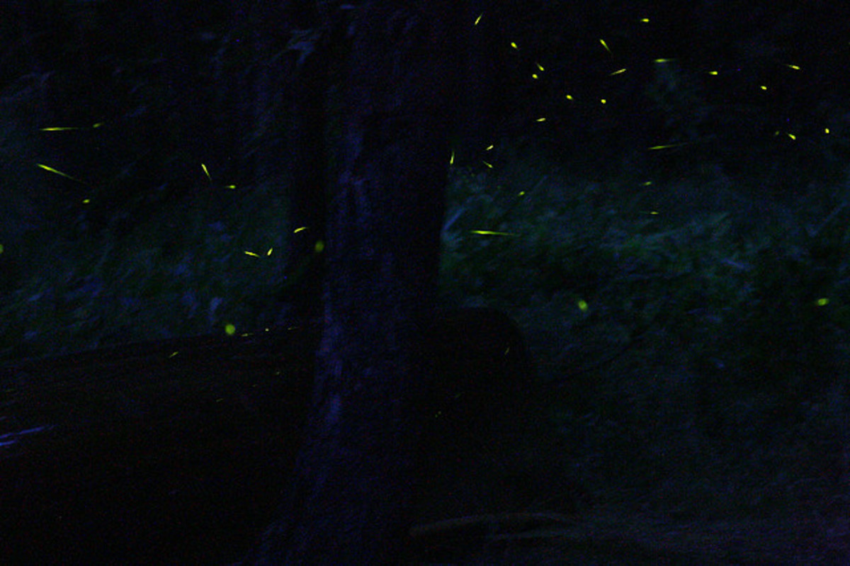Multiple fireflies dancing around..