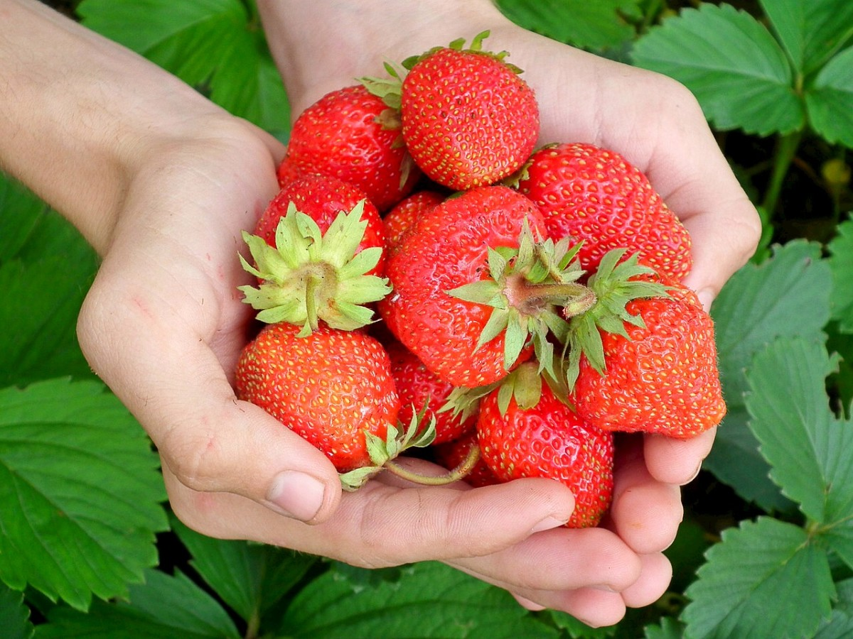 Strawberries are one of the produce types likely to harbour pesticides.