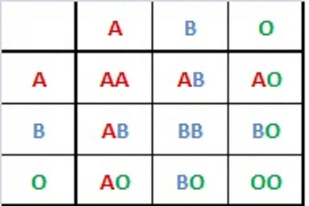 Inheritance patterns of the ABO blood groups - A and B are codominant, so those who inherit type A and type B alleles will have type AB blood. Those with types AO or BO will be type A or B, respectively.