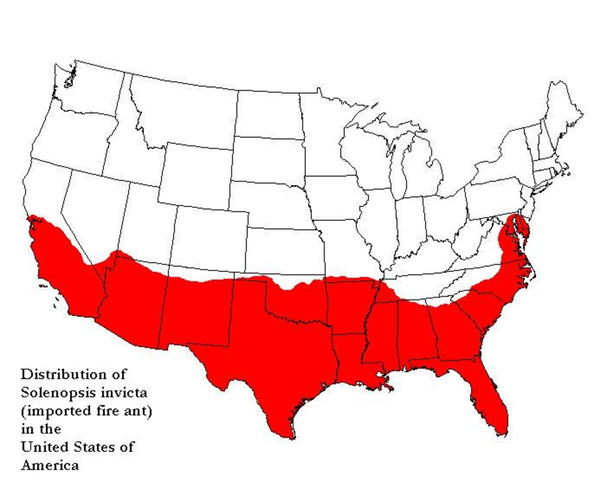 Fire ants are a nuisance the whole body half of the U.S.