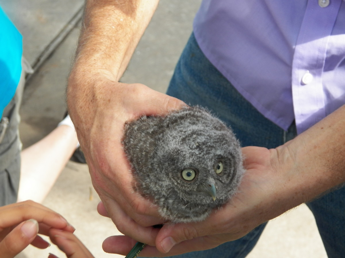 Handling Baby Owls. They didn't seem to mind being passed from one person to another.