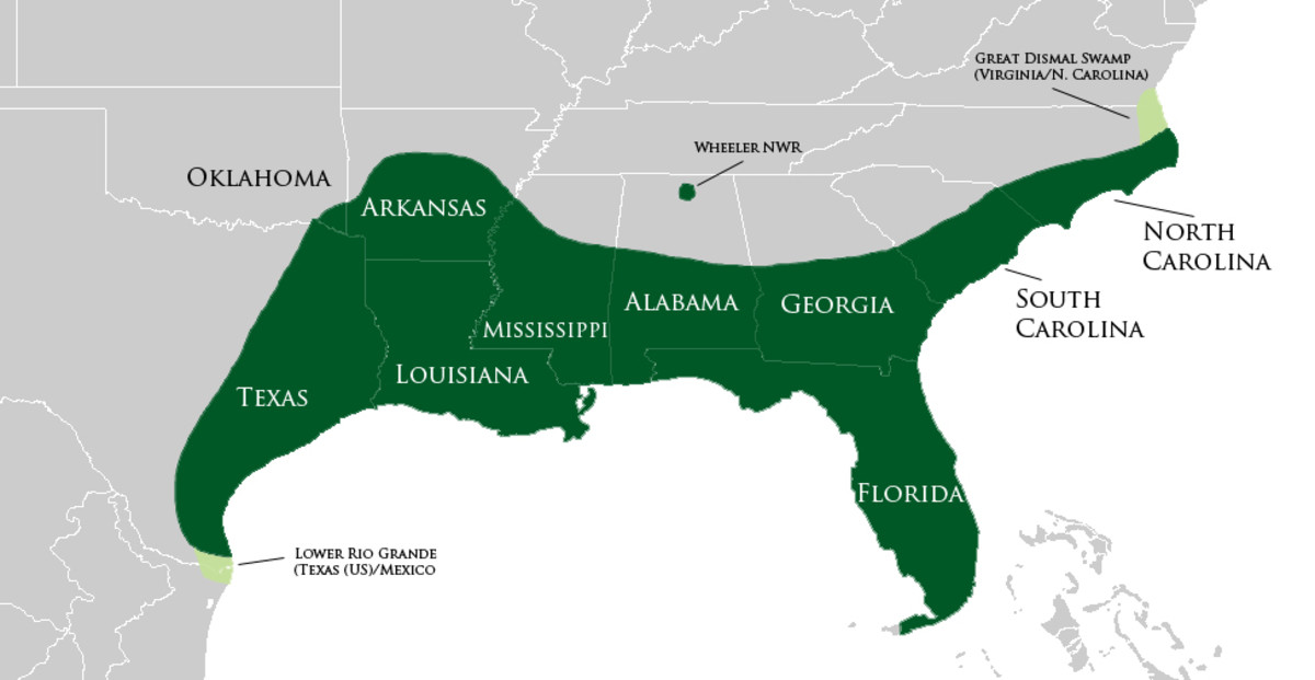 The alligator involved in the recent attack at Disney World was an American Alligator. The range of the American Alligator is depicted in the map above.