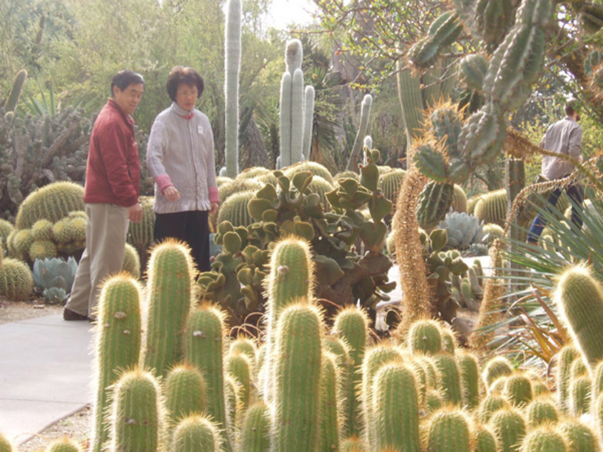 Walking through the desert display of Huntington Gardens in Pasadena CA.