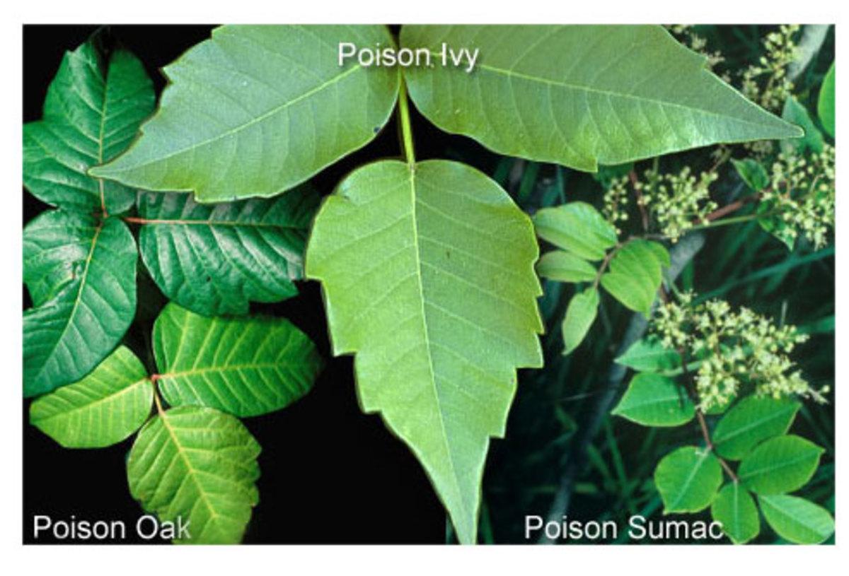 pesky-plants