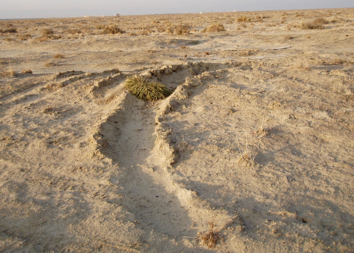 Desiccated earth devoid of water. Taken in 2007 near Edwards AFB in California's Mojave Desert.