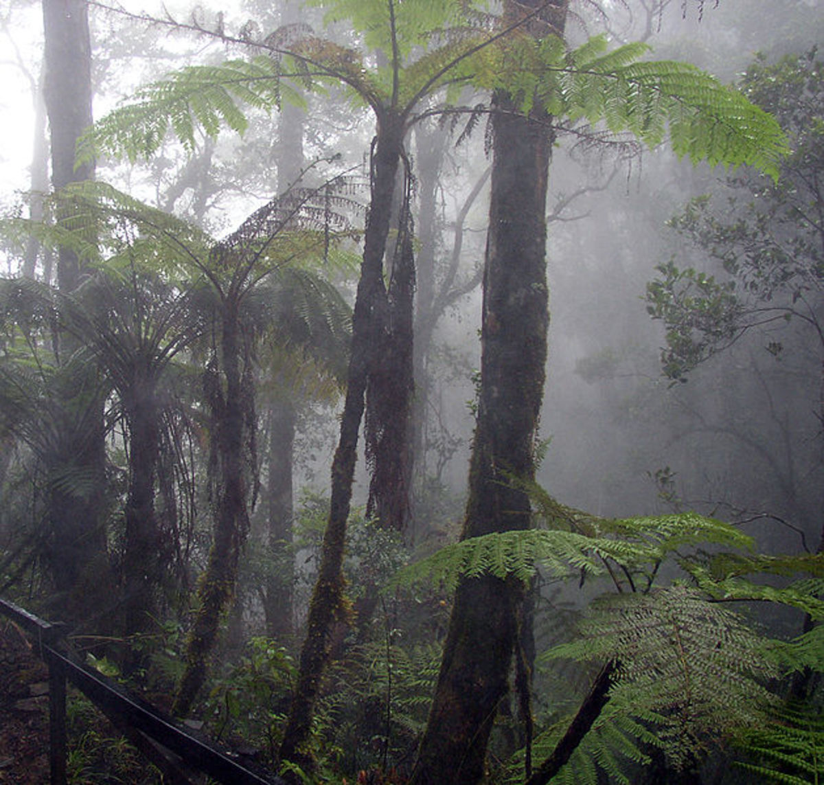 Recent research has shown that tropical jungles create their own rain. We need them to stay alive, so we can thrive.