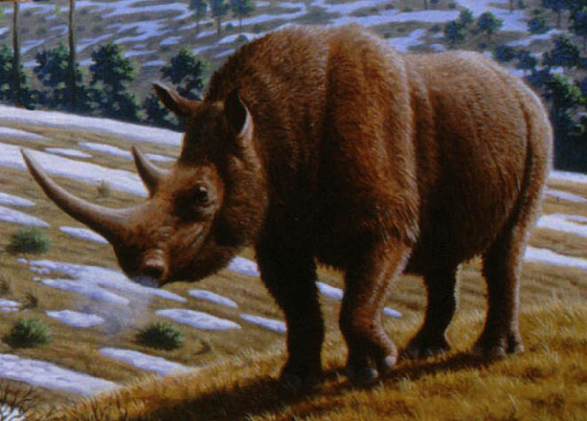 A depiction of the woolly rhino by Mauricio Anton.