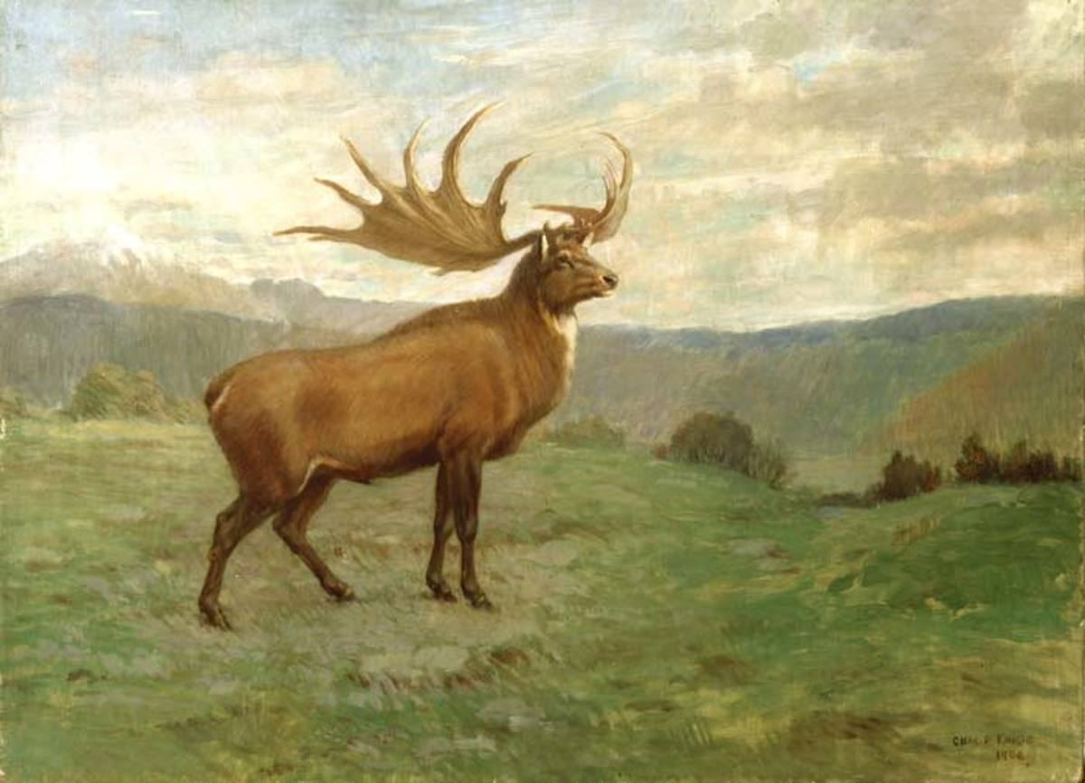 A drawing of the giant deer by Charles R. Knight.