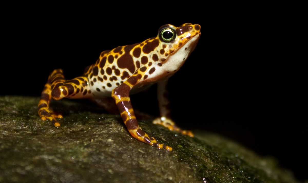 Amphibians have slimy skin and must return to water to breed. They lay soft shelled eggs and are cold-blooded