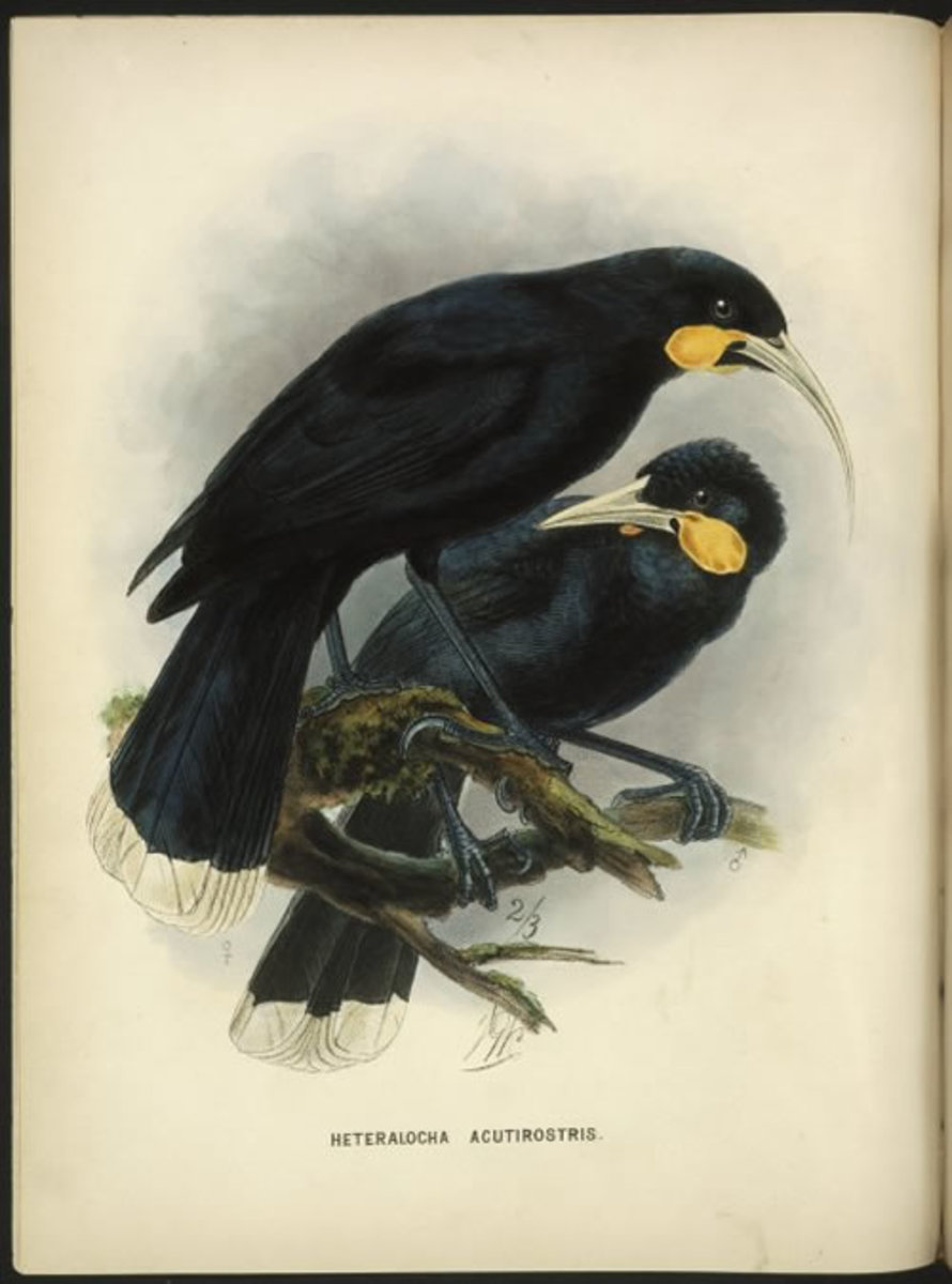Note the difference in the beak: The female had a long pointy beak, whereas the male had a short strong beak.