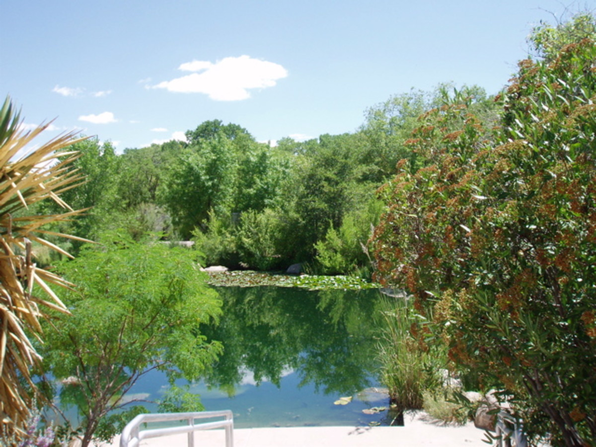Albuquerque Botanical Garden - this pool is actually diverted from the Rio Grande River. It hosts fish and waterfowl, in addition to water plants and trees not native to the area.